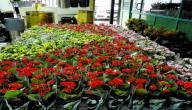 بحث عن نباتات الزينة