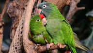 أسماء طيور الحب