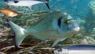 أنواع الأسماك وأسماؤها