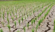 تاريخ نوبات الجفاف وأثارها