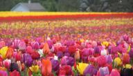 موضوع عن فصل الربيع