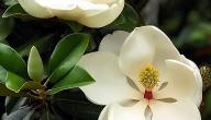 أسماء زهور نادرة
