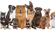 أنواع الكلاب