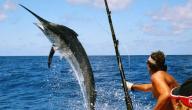 أفضل طعم لصيد السمك