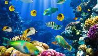 أنواع الأسماك وأهم الاختلافات بينها