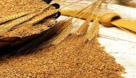 فوائد نخالة القمح
