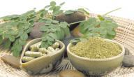 فوائد نبات المورينجا