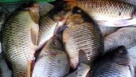 صيد الأسماك في العراق