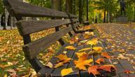 متى يبدأ فصل الخريف