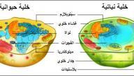 مكونات الخلية الحيوانية