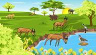 مكونات النظام البيئي