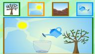 شرح مراحل نمو النبات للأطفال