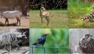 صيد الحيوانات في الأردن