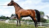 قوة الحصان