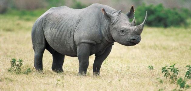 نتيجة بحث الصور عن وحيد القرن
