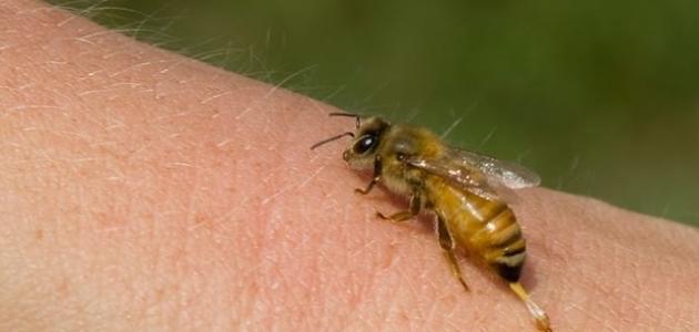 فوائد لسعات النحل