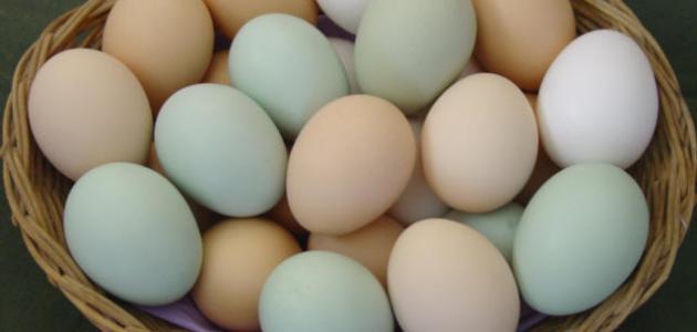 ما فوائد البيض