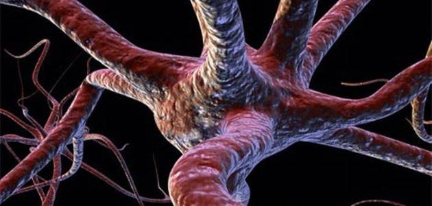 عدد الخلايا في جسم الإنسان