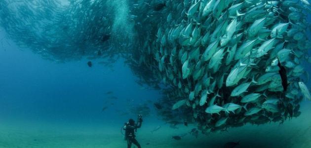 صيد أسماك التونة