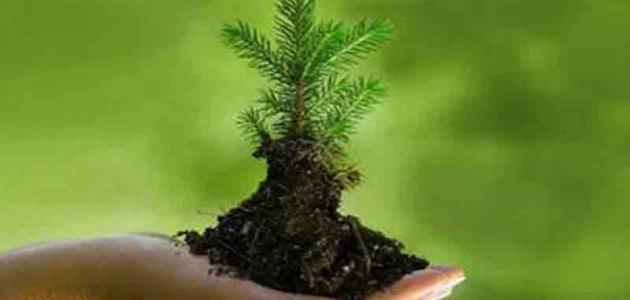حماية البيئة وحقوق الإنسان