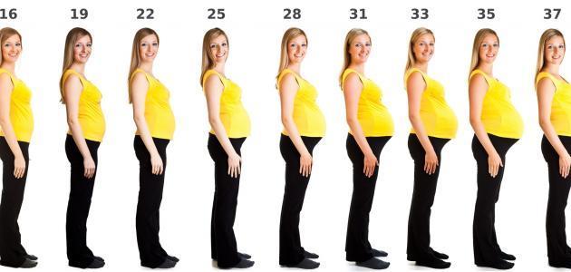 مراحل الحمل بالأسابيع والأشهر