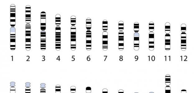 عدد كروموسومات الإنسان