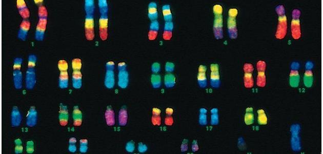 عدد الكروموسومات في الإنسان