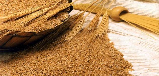 فوائد جنين القمح للأطفال