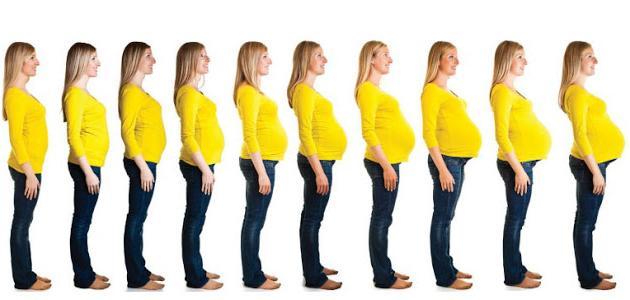 في أي شهر يظهر بطن الحامل موضوع