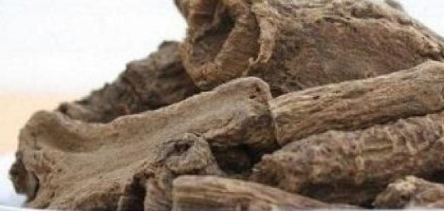 فوائد عشبة القسط الهندي