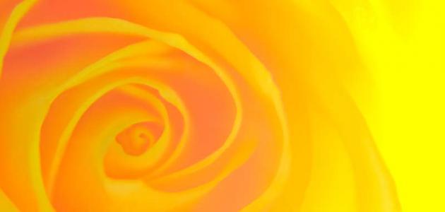 على ماذا يدل اللون الأصفر