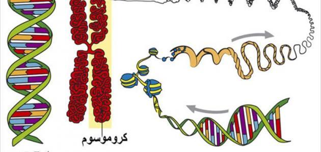 الوراثة والصفات