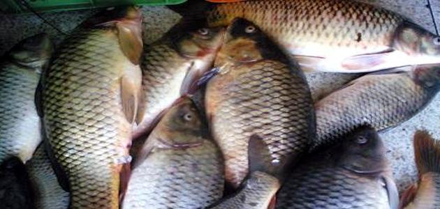 صيد السمك العراقي