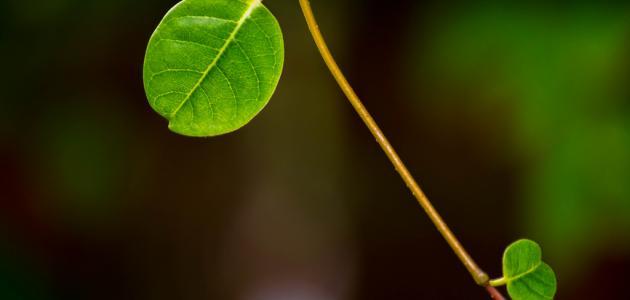 كيف تتنفس النباتات الخضراء