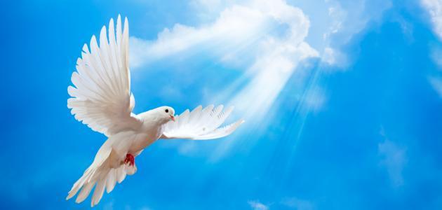 الإسلام والسلام