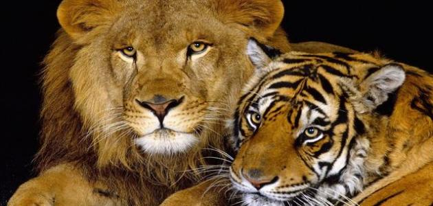 أقوى الحيوانات