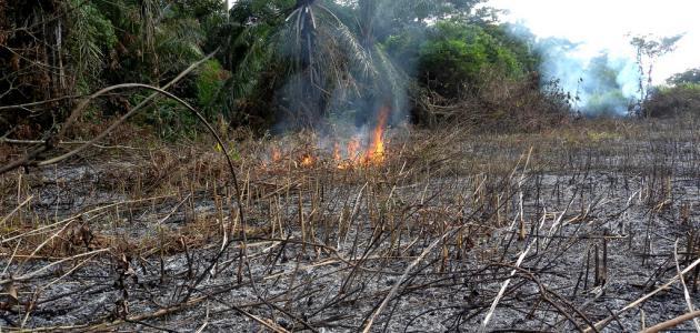 أثر الحروب على البيئة