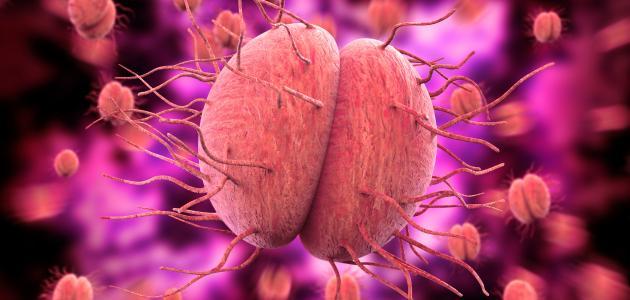 احسب لا يمكن الوصول إليها إتبع مدة علاج مرض السيلان عند الرجال Comertinsaat Com