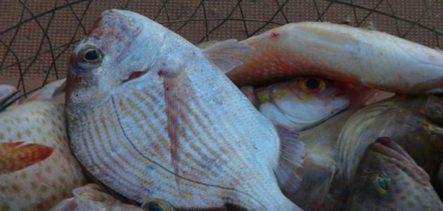 رحلات صيد سمك
