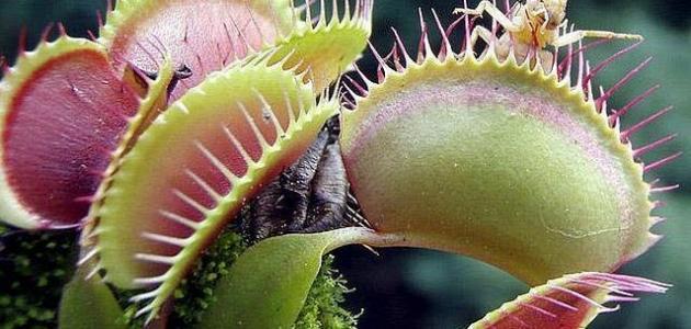 أسماء النباتات المفترسة