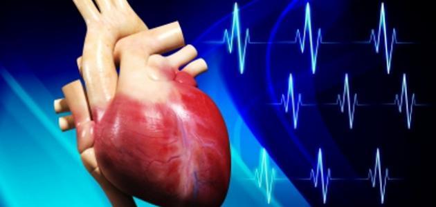 عدد صمامات القلب