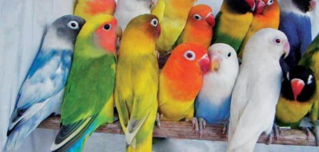 طيور الزينة في العالم