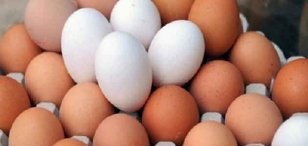 فوائد أكل البيض للشعر