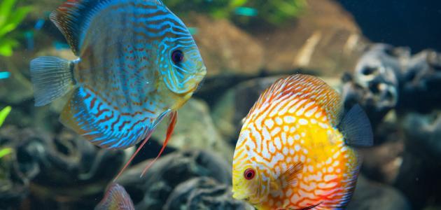 كيف تتنفس الاسماك