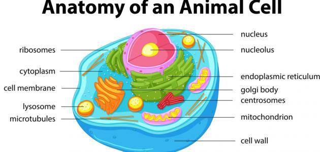 تركيب الخلية الحيوانية
