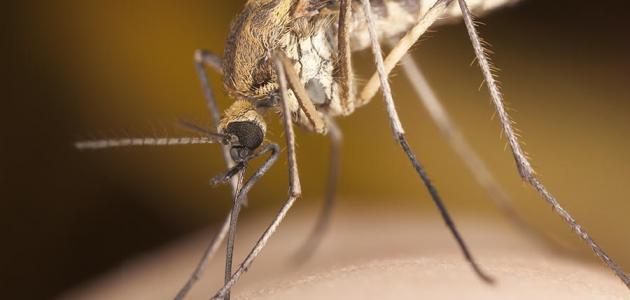 علاج مضاعفات الملاريا