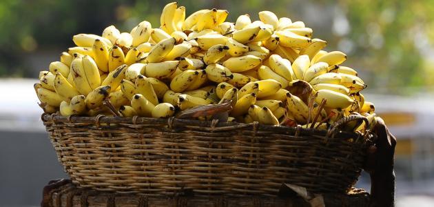 فوائد الموز الهندي