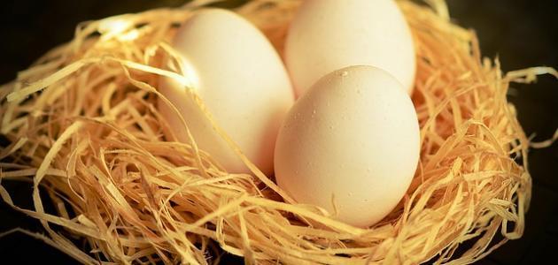 فوائد بيض الحمام للنطق