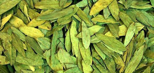 فوائد البسباس للتخسيس للرجيم ؟ تعرفي على اهمية وصفة زريعة نبات البسباس  لانقاص الوزن
