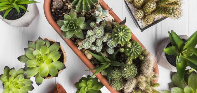 كيفية الاعتناء بالنباتات المنزلية